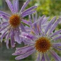 Цветы – как звёзды, звёзды – как цветы... :: Людмила Богданова (Скачко)
