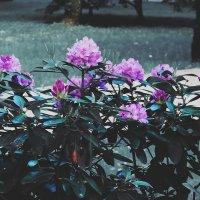 Цветы_1 :: Елена