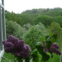 Окно в май №2 :: Марина Домосилецкая