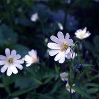 Цветок :: Марина Легкая
