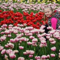 Цветы весны :: Андрей Шейко