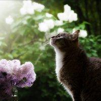 Любимый кот. :: Светлана Салахетдинова