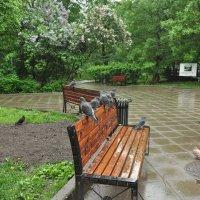 дождь :: елена