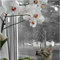 Кошка :: Ирина Белорусочка