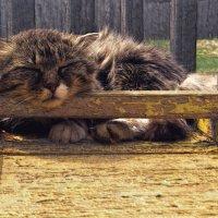 Боец отдыхает. :: Виктор Никаноров