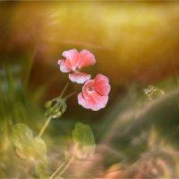Волны цветения :: 8ele8 Elena