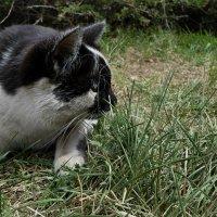 Кот радуется весне :: Настя Перфильева