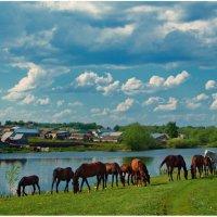 Лошади и облака :: Евгений Турков