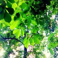 Изумрудное лето :: Вероника Озем