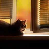 Закат. Кошка на окошке. :: Алексей Хаустов