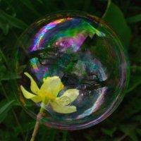 Мыльный пузырик счастья :: Мила Мит