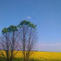 Украина :: Алексей Романенко