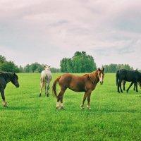 Хорошо в деревне летом :: Дмитрий Конев