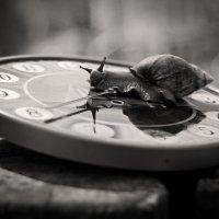 Время... :: Eugene Prokoff