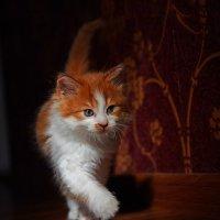 Тихой лапкой... :: Александр Бойко
