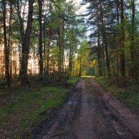 Майским вечером в лесу :: Сергей Шабуневич