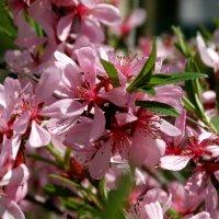 весна..,ещё весна :: Alla Swan
