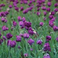 Цветы в парке. :: Олег Чернышев