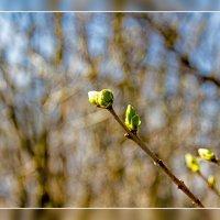 Весна :: Юрий Глушков