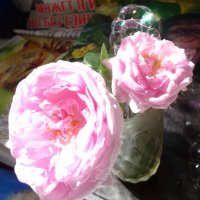 Алмаз на розе... :: Алекс Аро Аро