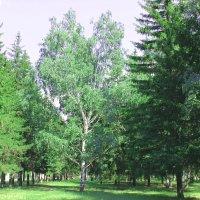 Красавица леса :: раиса Орловская