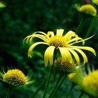Мои цветочки :: Galina Belugina