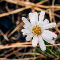 28.05.2016 Агинское, дождь и макро. :: Даба Дабаев