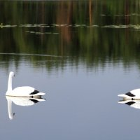На озере. :: Борис Митрохин