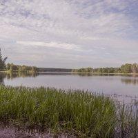 Утро на озере :: Константин Сафронов
