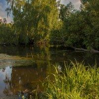 Затока :: Николай Климович