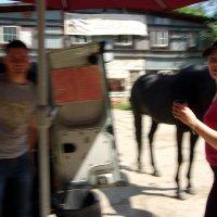 лошадь в очереди за кофе :: елена