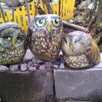 Живые камни :: Светлана Ляшко