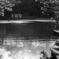 Майский вечер у пруда :: Константин Фролов