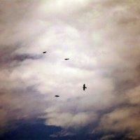 Полёт птиц... :: Настя Перфильева