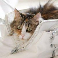 Полная сумка :: Наталия Григорьева