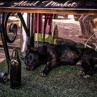 Alcool market :: Veaceslav Godorozea