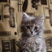 Котёнок :: samplephoto _