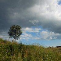 Июньский пейзаж :: Ольга