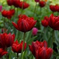 Яркие краски мая :: Наталья Лакомова