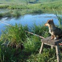 Чепа на рыбалке :: Ольга