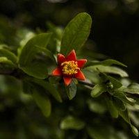 Угадай растение :: Эмиль Абд