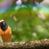 Птичка :: Natalia Babukh