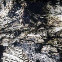 Дерево :: Георгий Морозов