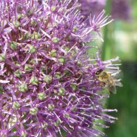 Лук с пчелкой :: Елена Перевертыш