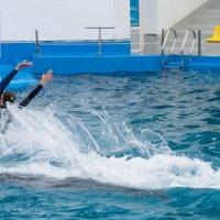 Одесский дельфинарий :: Сергей Форос