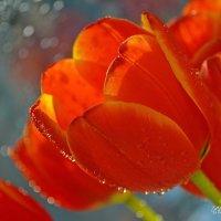 Тюльпаны :: Светлана Prolubshikov@