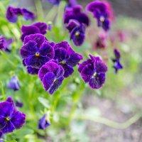 Цветочки... :: игорь козельцев