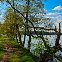весенний денек :: Евгения