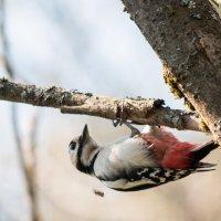 Лес рубят - щепки летят :: Тимофей Черепанов