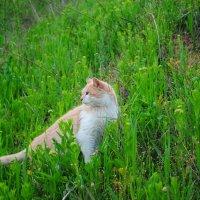 просто кот. :: Андрeй Владимир-Молодой